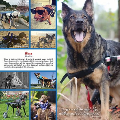expected calendar delivery date is early november 2018 all proceeds from calendar sales go to the handicapped pets foundation