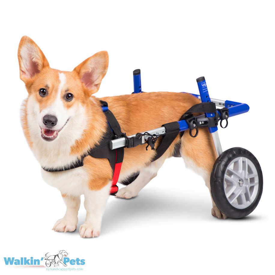 Dog Wheelchair For Corgis   Corgi Cart ...