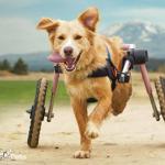 Ireland in a Walkin' Wheels Medium Rear Wheelchair