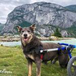 Kahia in Med/Large Walkin' Wheels