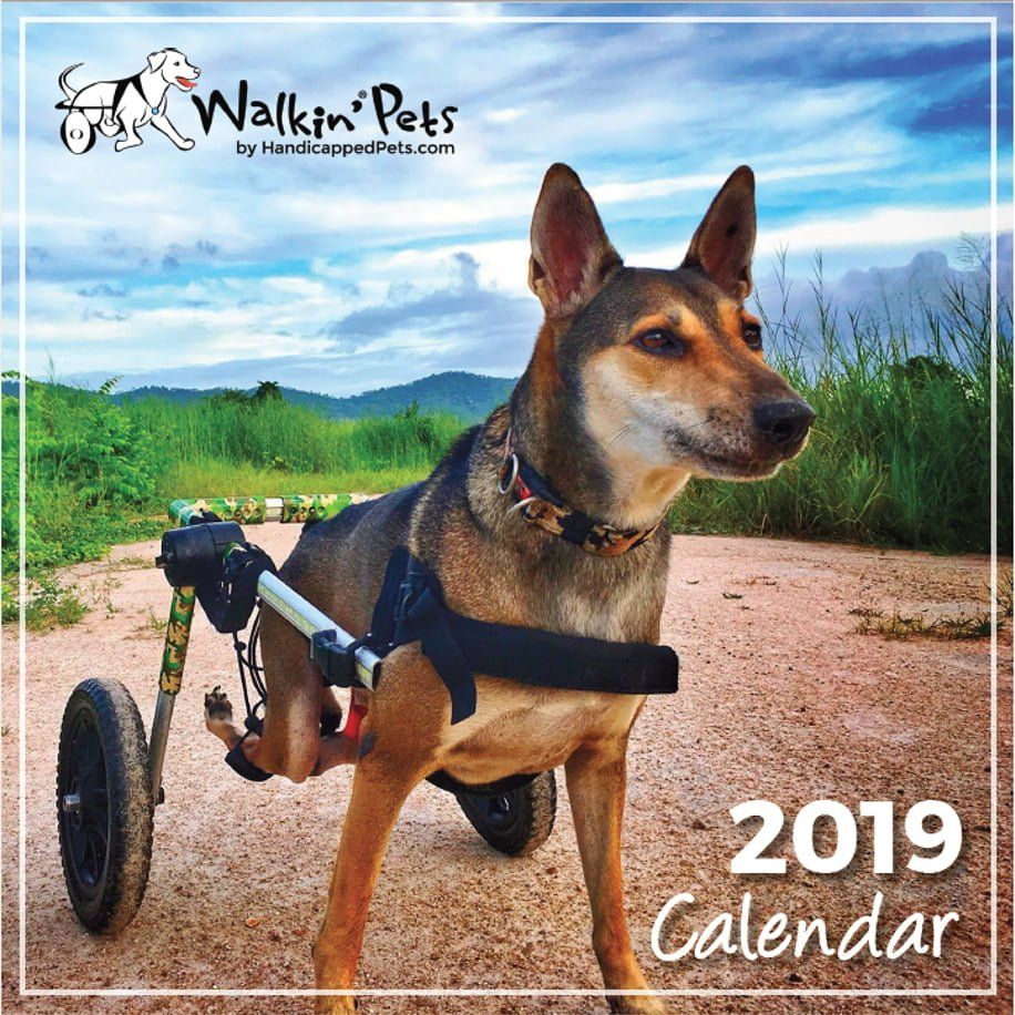 2019 Walkin Pets Calendar Dog Wheelchair Calendar