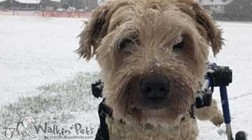 Meet Paddy, our Featured Pet of the Week!