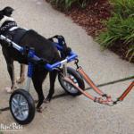 Wheelchair Leash