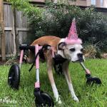 Bonnie in Full Support Wheelchair