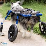 Griffin in Full Support Med/Large Wheelchair