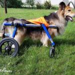 Kobi in Quad Wheelchair