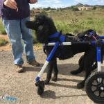 Leo in Med/Large Wheelchair