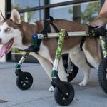 Nodder in Quad Wheelchair