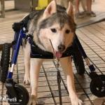 Bobby from Smartiei in Quad Wheelchair