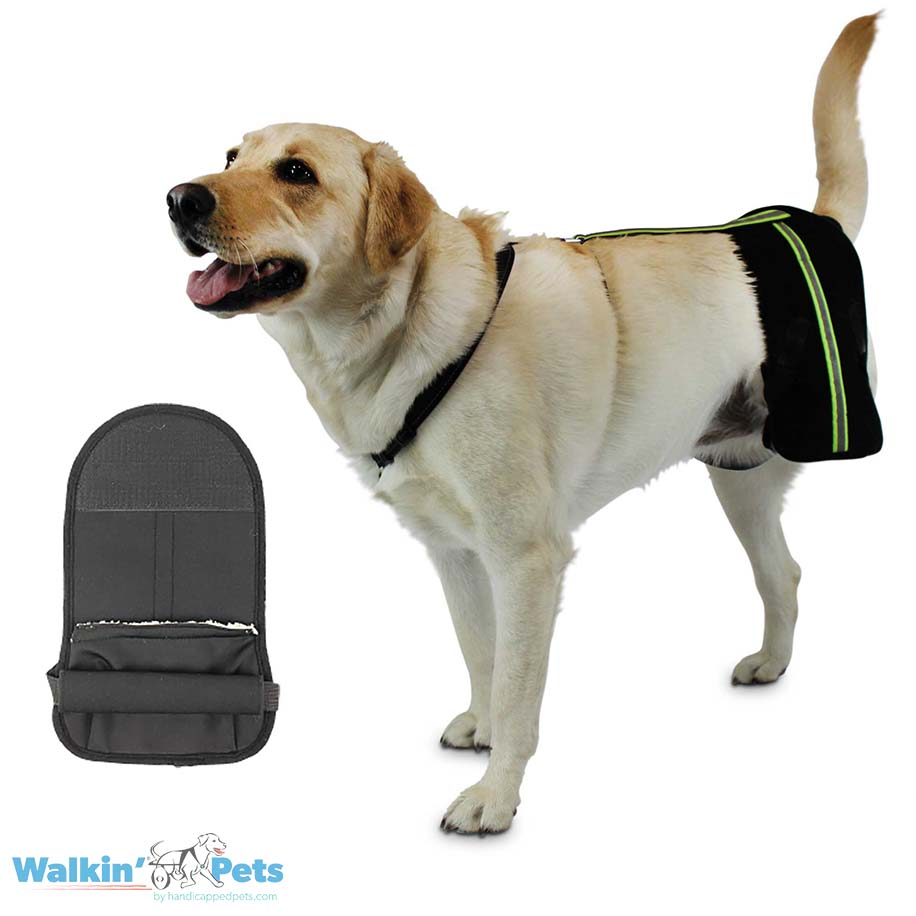 Amputee hip support system for tripod dogs