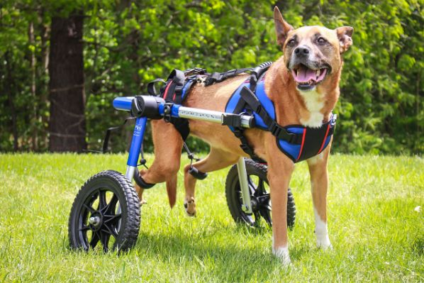 walkin' wheels dog wheelchair