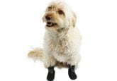 Walkin' Traction Socks for Dogs
