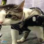 Cat in Quad Walkin' Wheels