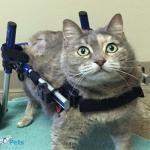Walkin' Cat Wheelchair
