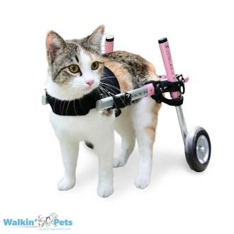 Danette in Walkin' Cat Wheelchair