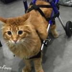 Cat Wheelchair from Engels