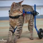 Kygo in Cat Wheelchair