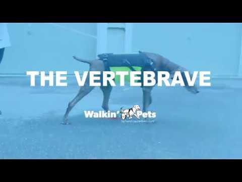 vertebraVe® Instructional Video