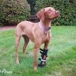 Walkin' Fit Adjustable Splint
