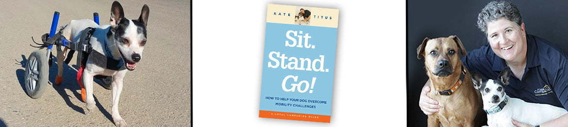 Sit. Stand. Go! banner