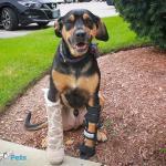 Tucker in Walkin' Fit Adjustable Splint