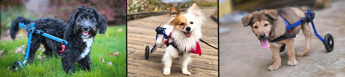 Mini Walkin' Wheels Wheelchair Banner