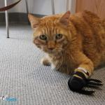 Cat Front Splint