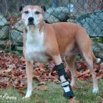 Fiona in an Adjustable Splint