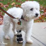 Maisy in a Front Splint