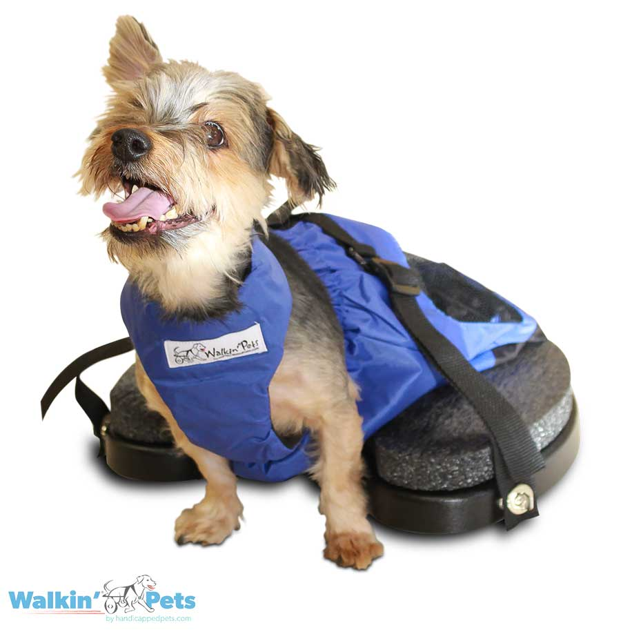 Mobility Aid For Dogs Walkin Scooter Handicapped Pets