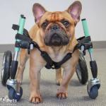 Bane in a Seafoam Quad Wheelchair