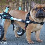 Bane in Small Seafoam Wheelchair