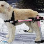 Lola in Skis