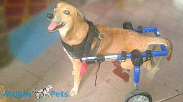Featured Pet Viejo