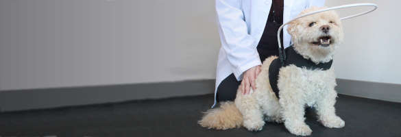 Helping a Pet Adjust to Sudden Vision Loss