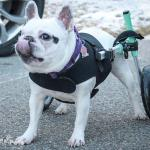 Ella in Front Vest with Seafoam Small Wheelchair