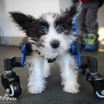 Tilly in Mini Quad Wheelchair