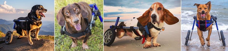 2021 Walkin Pets Calendar Contest Handicapped Pets