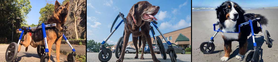 Walkin' Wheels Fully Supportive Large for Handicapped Pets