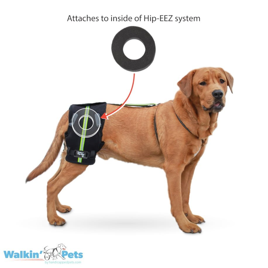 Hip pressure sore treatment for dogs