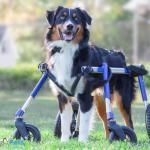 Roger in his new Walkin' ® Wheels Medium/Large Quad Wheelchair