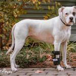 Roxy in Carpal Splint