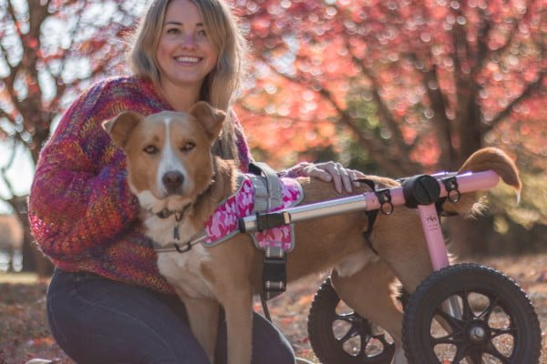 dog wheelchair front harness