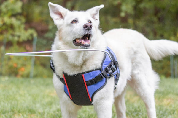 Give Blind Pets Back Their Confidence with the New & Improved Halo
