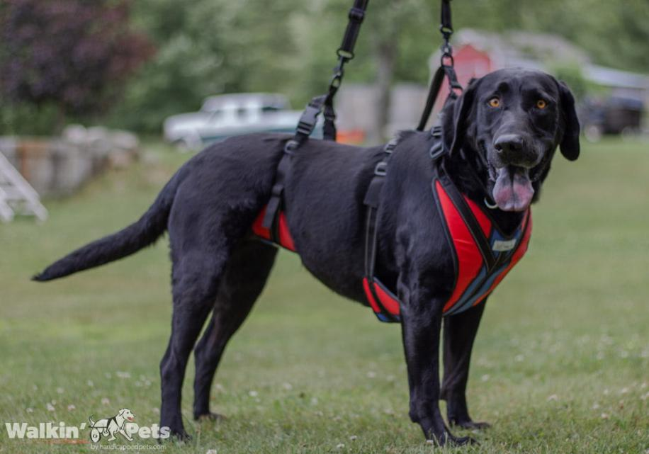 total body dog lift harness