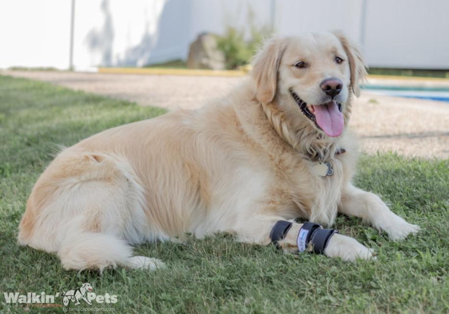front dog leg splint